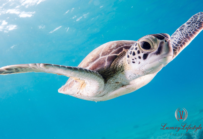 Cancun – Tulum Ruins & Turtle Swim