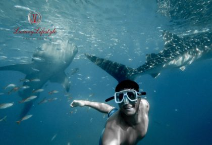 Cabo San Lucas – Snorkel with Whale Sharks