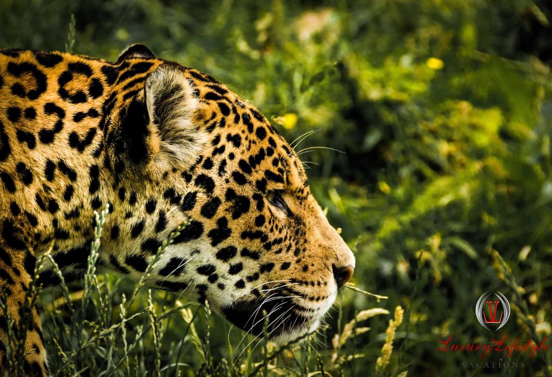 Puerto Morelos – Croco Cun Zoo